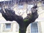 дерево-руки